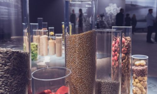 """Temporary exhibitions """"It Started with a Grain… The History of Cultivated Plants"""", Silesian Museum"""